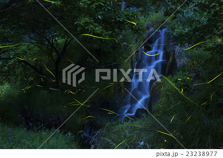 ホタルと滝 23238977