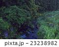 蛍 夜 昆虫の写真 23238982
