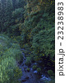 蛍 夜 昆虫の写真 23238983