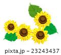 ひまわりの花 ワンポイント 23243437