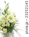 白い花 23252145