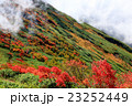 霧湧く紅葉の谷川岳稜線 23252449