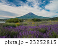 富士山 ラベンダー 花の写真 23252815