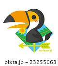 風見鶏 鳥 オオハシのイラスト 23255063