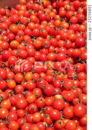 ミニトマト 23256891