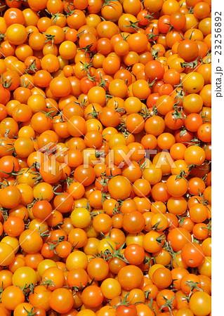 ミニトマト 23256892