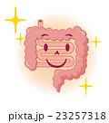 腸 イラスト 23257318
