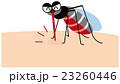 血を吸ってお腹が赤くなった蚊 23260446