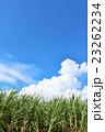 青空 雲 さとうきびの写真 23262234