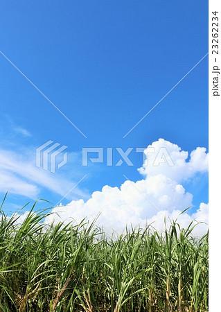 宮古島 青空と白い雲とサトウキビ畑 23262234