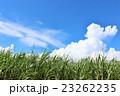 青空 雲 さとうきびの写真 23262235
