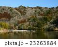 春の三島湖 23263884