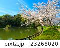 大村公園の桜 23268020
