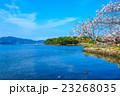 桜 空 青空の写真 23268035