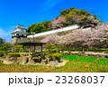 大村公園 桜 オオムラザクラの写真 23268037