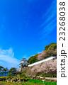 大村公園 桜 オオムラザクラの写真 23268038