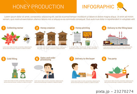 Honey production stages in infographic form 23270274