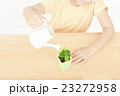 植物を世話する女の子 植物を育てる パーツカット ボディパーツ ボディーパーツ 23272958
