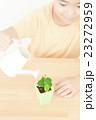 植物を世話する女の子 植物を育てる パーツカット ボディパーツ ボディーパーツ 23272959