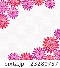菊 花 和柄のイラスト 23280757