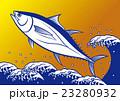 マグロ 本マグロ 魚のイラスト 23280932