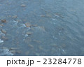 Hot spring trip 23284778
