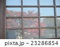 窓に映る紅葉 23286854