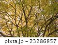 木々の紅葉 23286857