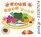 秋 味覚 秋の味覚のイラスト 23287074