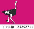 ダチョウ【動物・シリーズ】 23292711