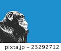 チンパンジー 23292712