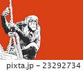 チンパンジー【動物・シリーズ】 23292734