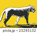 ライオン メス【動物・シリーズ】 23293132