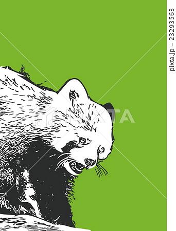 レッサーパンダ【動物・シリーズ】 23293563