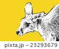 カンガルー【動物・シリーズ】 23293679