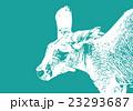 カンガルー【動物・シリーズ】 23293687