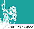 チンパンジー【動物・シリーズ】 23293688