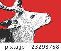 ニホンジカ【動物・シリーズ】 23293758