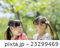 新緑の公園でタンポポを持つ姉妹 23299469