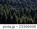 森林 23300406