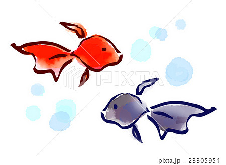 筆描き 夏 風物詩 金魚のイラスト素材 23305954 Pixta