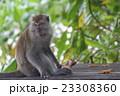 ペナン島 タマンネガラ国立公園モンキービーチで出会った猿 23308360
