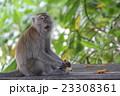ペナン島 タマンネガラ国立公園モンキービーチで出会った猿 23308361