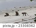 ペナン島 タマンネガラ国立公園モンキービーチで出会った猿 23308362