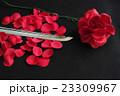 赤いバラと日本刀の刀身 23309967
