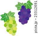 果物 フルーツ ぶどうのイラスト 23312691