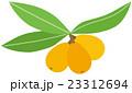 果物 フルーツ ビワのイラスト 23312694