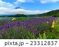 富士山 ラベンダー 23312837