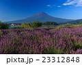 富士山 ラベンダー 23312848