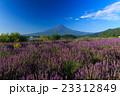 富士山 ラベンダー 23312849
